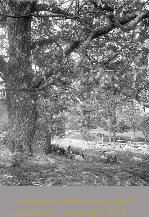 'SheepManahan Landscapes'